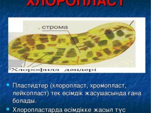 ХЛОРОПЛАСТ Пластидтер (хлоропласт, хромопласт, лейкопласт) тек өсімдік жасуша