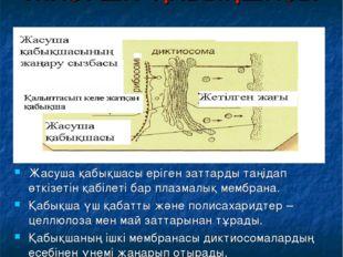 ЖАСУША ҚАБЫҚШАСЫ Жасуша қабықшасы еріген заттарды таңідап өткізетін қабілеті