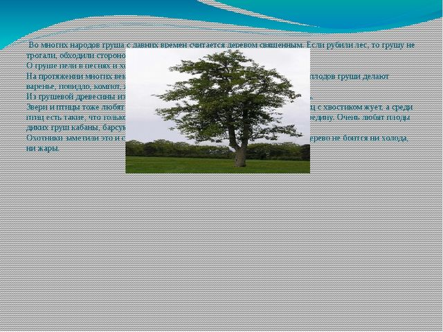 Во многих народов груша с давних времен считается деревом священным. Если ру...