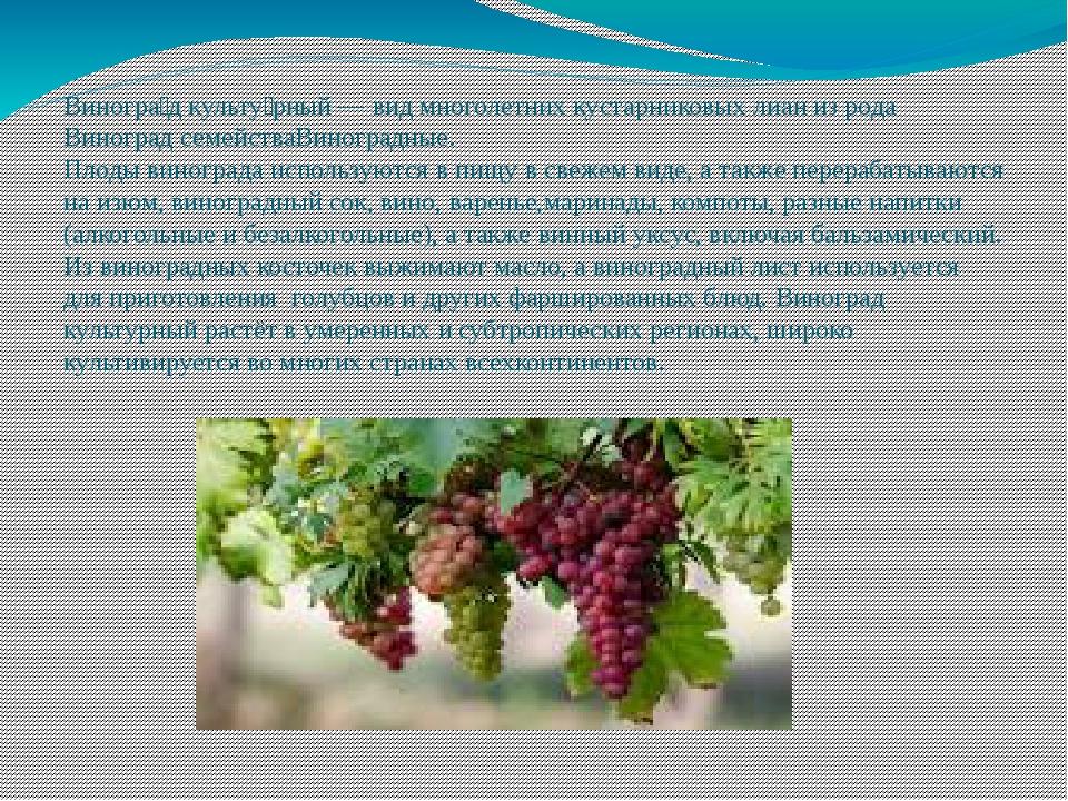 Виногра́д культу́рный—видмноголетнихкустарниковыхлианиз родаВиноградс...