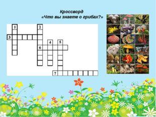 Кроссворд «Что вы знаете о грибах?»