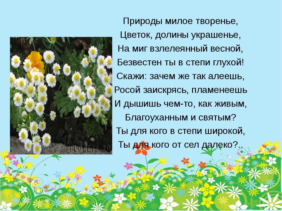 Природы милое творенье, Цветок, долины украшенье, На миг взлелеянный весной,...
