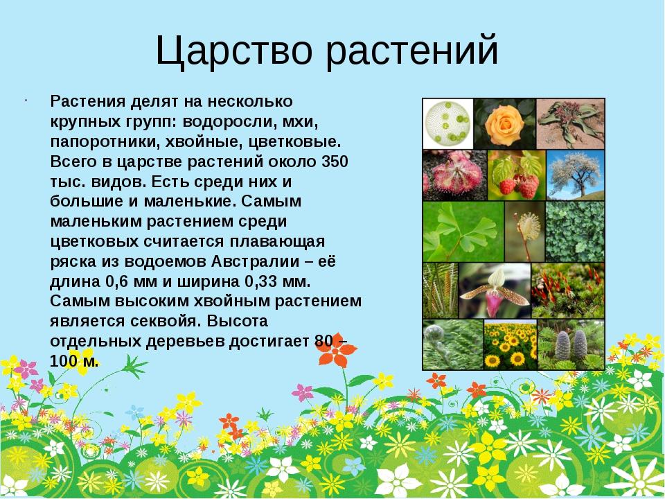 Царство растений Растения делят на несколько крупных групп: водоросли, мхи, п...