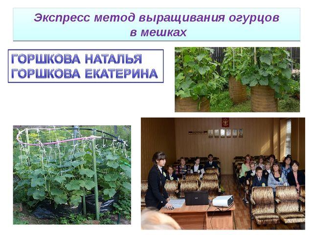 Экспресс метод выращивания огурцов в мешках
