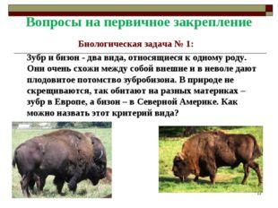 Вопросы на первичное закрепление Биологическая задача № 1: Зубр и бизон - два