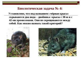 Биологическая задача № 4: Установлено, что под названием «чёрная крыса» скрыв