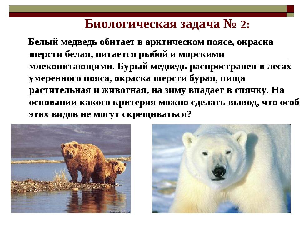 Биологическая задача № 2: Белый медведь обитает в арктическом поясе, окраска...