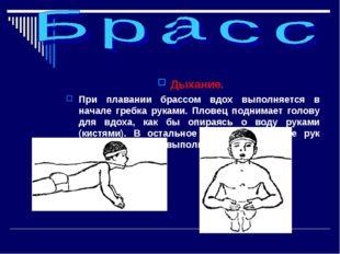 Дыхание. При плавании брассом вдох выполняется в начале гребка руками. Пловец