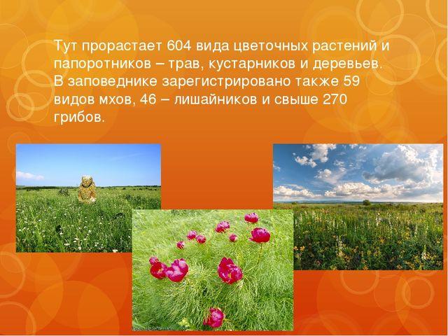 Тут прорастает 604 вида цветочных растений и папоротников – трав, кустарников...