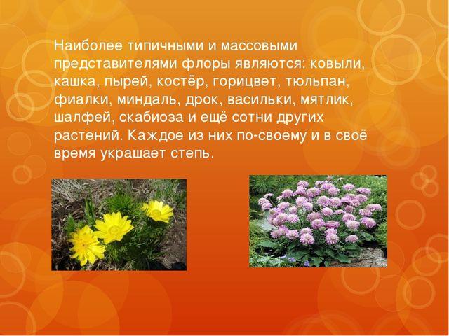 Наиболее типичными и массовыми представителями флоры являются: ковыли, кашка,...