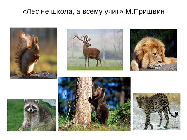 «Лес не школа, а всему учит» М.Пришвин