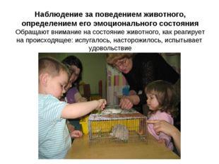 Наблюдение за поведением животного, определением его эмоционального состояния