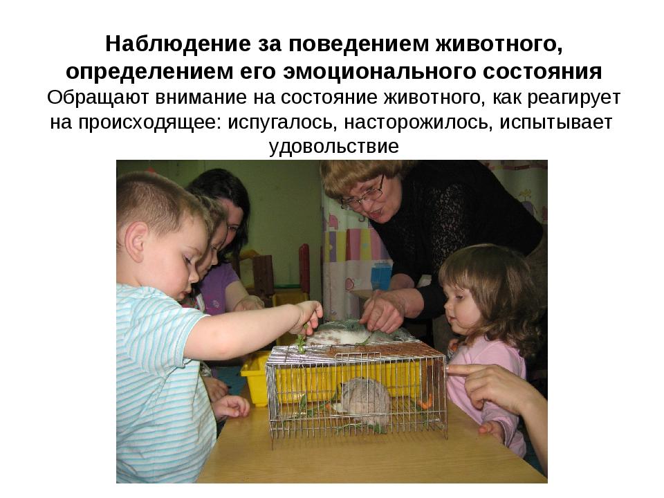 Наблюдение за поведением животного, определением его эмоционального состояния...