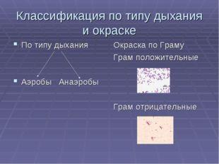 Классификация по типу дыхания и окраске По типу дыхания Аэробы Анаэробы Окрас