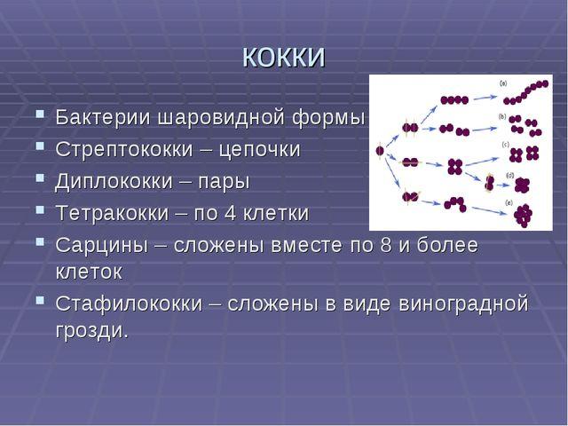 кокки Бактерии шаровидной формы Стрептококки – цепочки Диплококки – пары Тетр...