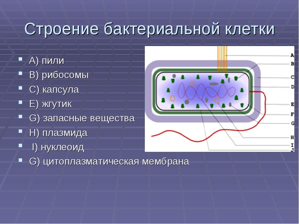 Строение бактериальной клетки A) пили В) рибосомы С) капсула Е) жгутик G) зап...