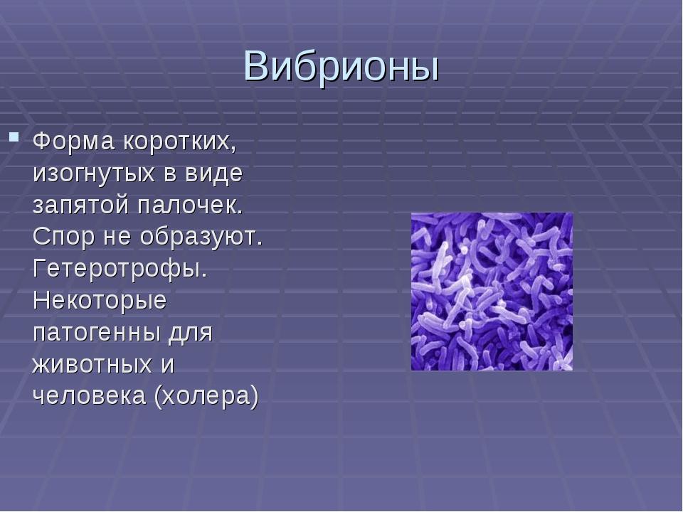 Вибрионы Форма коротких, изогнутых в виде запятой палочек. Спор не образуют....