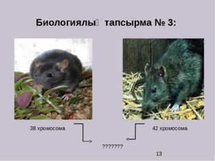 Биологиялық тапсырма № 3: 38 хромосома 42 хромосома ???????