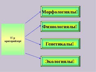 Морфологиялық Физиологиялық Генетикалық Экологиялық Түр критерийлері