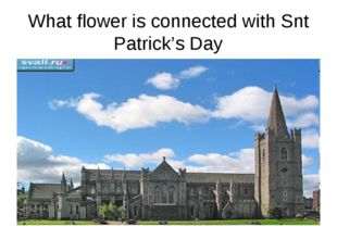 What flower is connected with Snt Patrick's Day