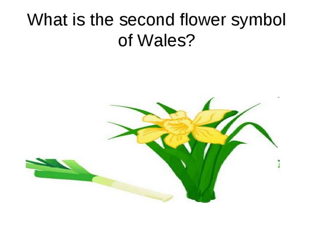 What is the second flower symbol of Wales?