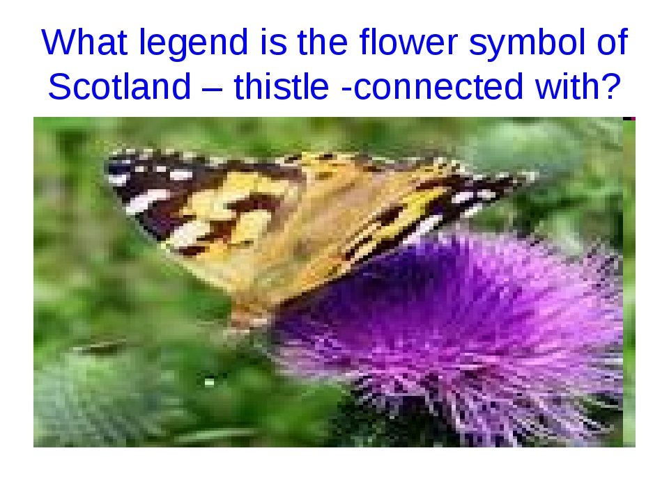 What legend is the flower symbol of Scotland – thistle -connected with?