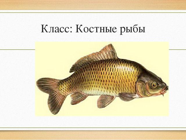 Класс: Костные рыбы