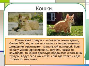 Кошки. Кошка живёт рядом с человеком очень давно, более 400 лет, но так и о