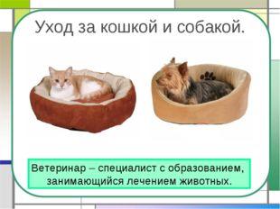 Уход за кошкой и собакой. Ветеринар – специалист с образованием, занимающийся