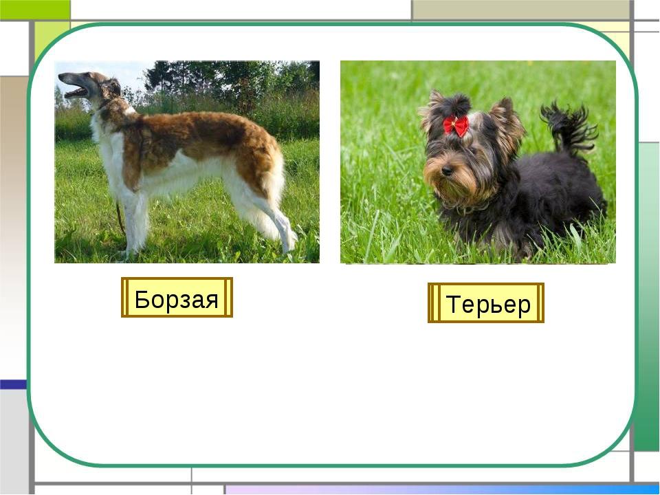 Лайка Овчарка Легавая Гончая Борзая Терьер
