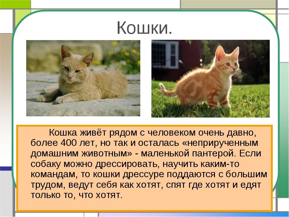 Кошки. Кошка живёт рядом с человеком очень давно, более 400 лет, но так и о...