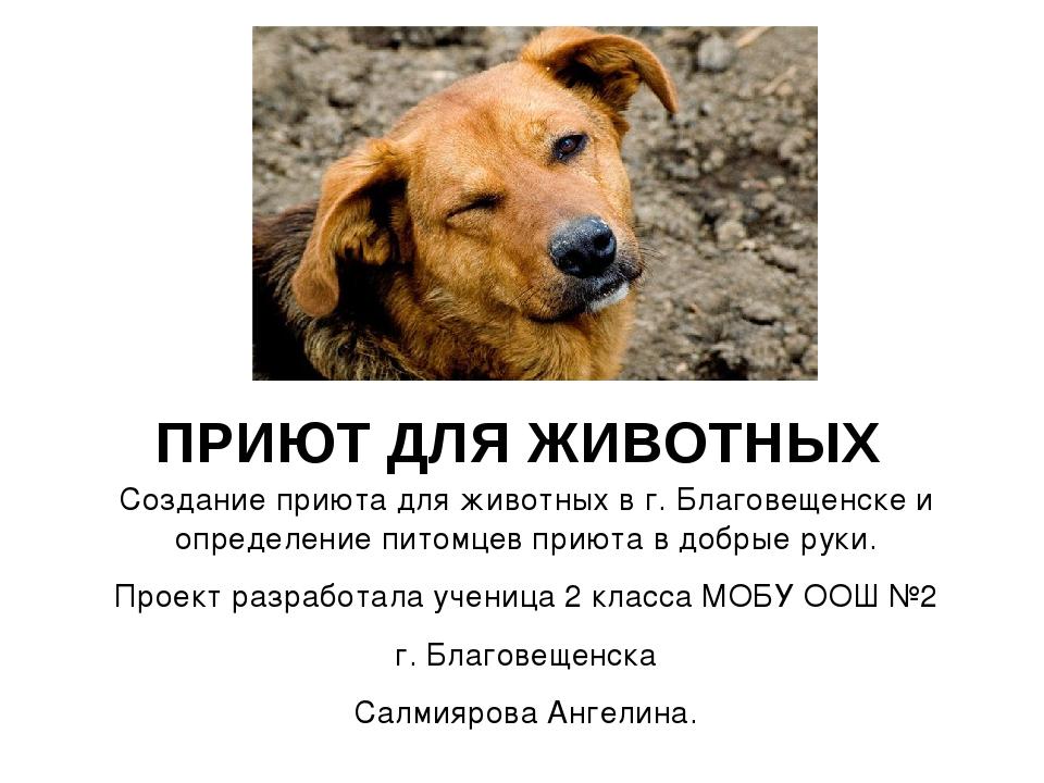 Создание приюта для животных в г. Благовещенске и определение питомцев приют...