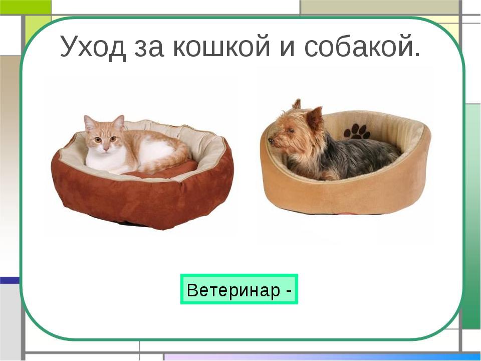 Уход за кошкой и собакой. Ветеринар -