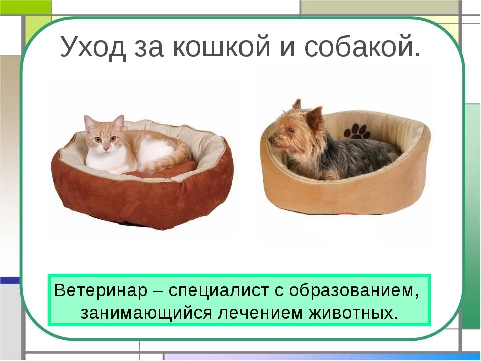 Уход за кошкой и собакой. Ветеринар – специалист с образованием, занимающийся...