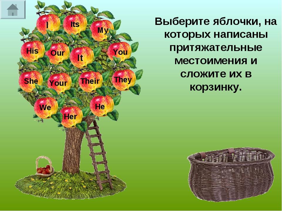 Выберите яблочки, на которых написаны притяжательные местоимения и сложите их...