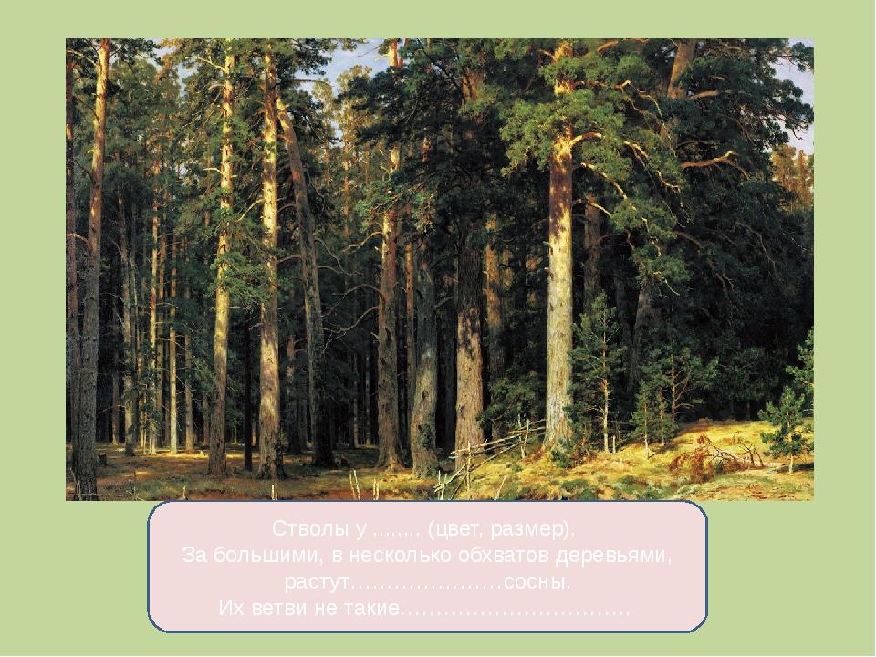 Стволы у ........ (цвет, размер). За большими, в несколько обхватов деревьями...