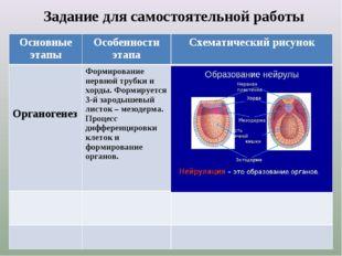 Задание для самостоятельной работы Основные этапыОсобенности этапаСхематич