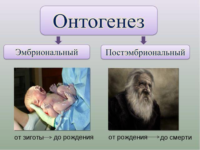 до рождения от рождения до смерти от зиготы