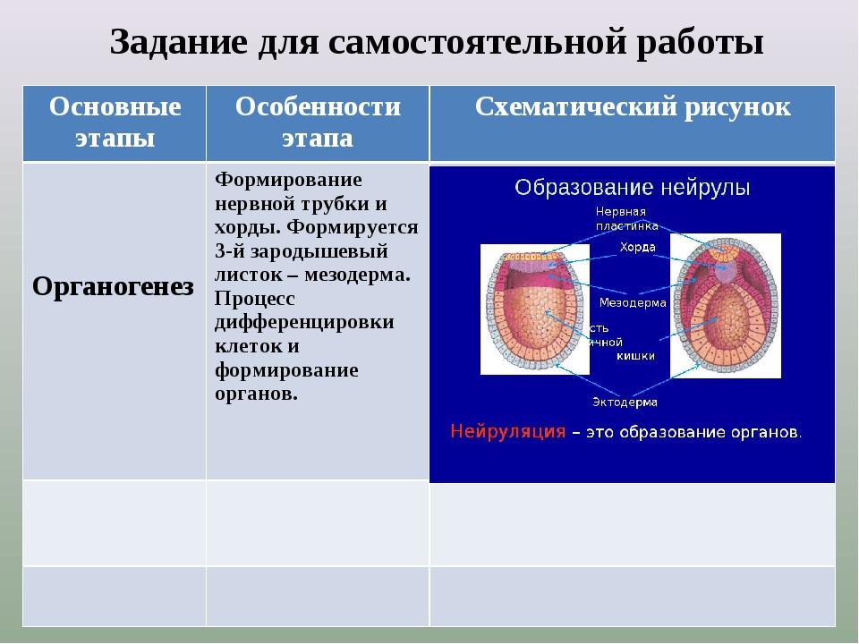 Задание для самостоятельной работы Основные этапыОсобенности этапаСхематич...