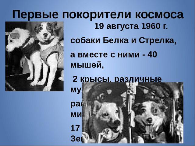Первые покорители космоса 19 августа 1960 г. собаки Белка и Стрелка, а вместе...