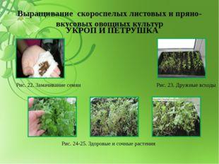 Выращивание скороспелых листовых и пряно-вкусовых овощных культур УКРОП И ПЕТ