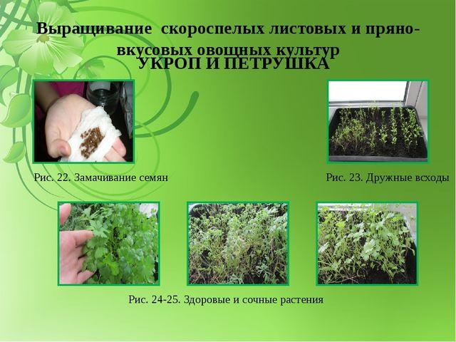 Выращивание скороспелых листовых и пряно-вкусовых овощных культур УКРОП И ПЕТ...