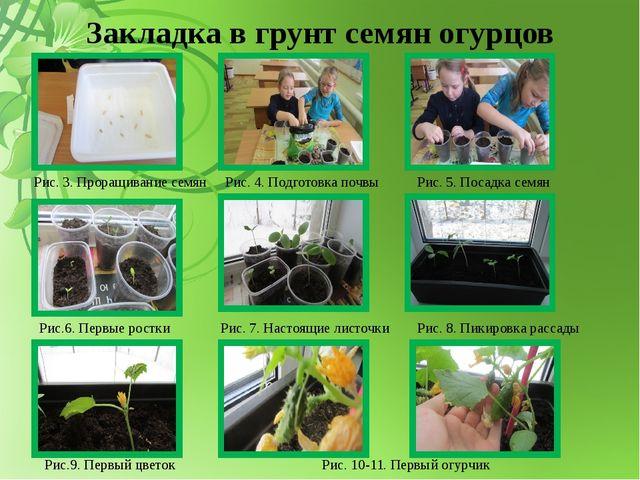 Закладка в грунт семян огурцов Рис. 3. Проращивание семян Рис. 4. Подготовка...