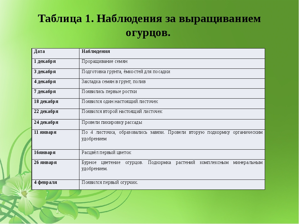 Таблица 1. Наблюдения за выращиванием огурцов. Дата Наблюдения 1 декабря Прор...