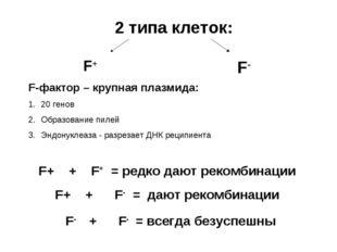 2 типа клеток: F+ F- F+ + F+ = редко дают рекомбинации F+ + F- = дают рекомби