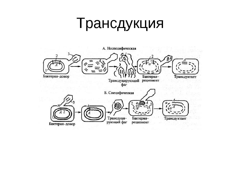Трансдукция
