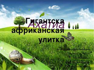 Ахатиа Гигантска африканская улитка Автор: Луценко Ирина Николаевна Воспитат