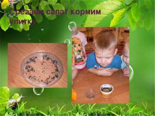 Срезаем салат кормим улитку
