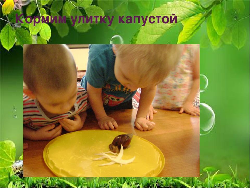 Кормим улитку капустой