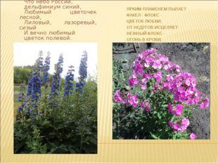 Что небо России, дельфиниум синий, Любимый цветочек лесной, Лиловый, лазоревы